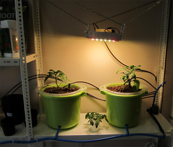 Image of hydroponic system under ASTIR LED Lights